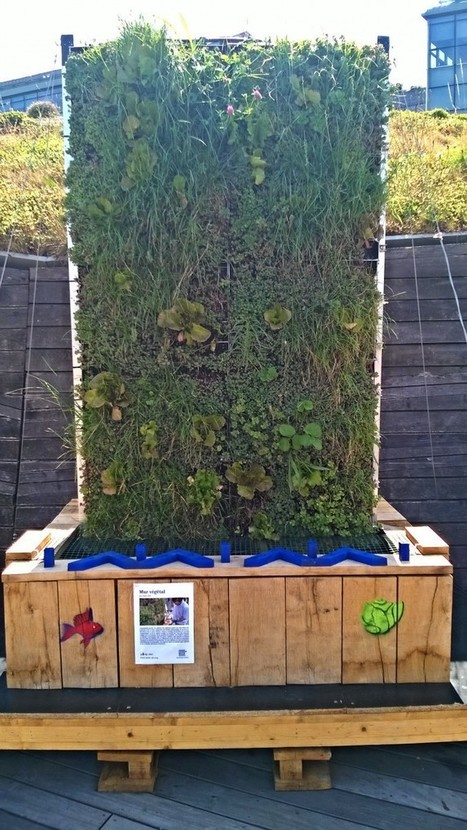 Living Roof - Acteurs du Paris Durable | compost au pied des immeubles, jardins partagés | Scoop.it