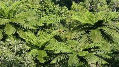 [Ecouter] La forêt humide calédonienne, une des plus denses au monde   ECONOMIE CIRCULAIRE EN AQUITAINE   Scoop.it