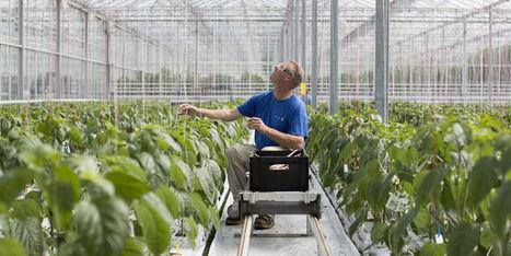 Pourquoi Bayer rachète Monsanto | Ainsi va le monde actuel | Scoop.it