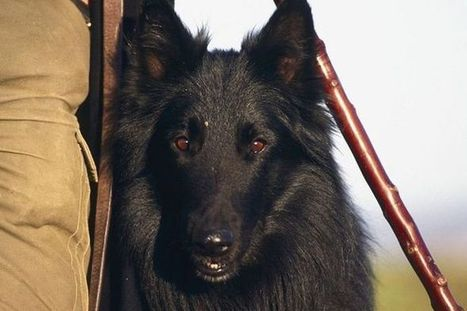 Military dogs protecting Prince William at RAF base are PUT DOWN days after he quits | World news | Scoop.it