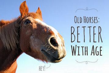 Senior Hoof Care Considerations - TheHorse.com (blog) | Horse Care | Scoop.it