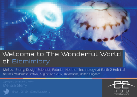 The Wonderful World of Biomimicry, Wilderness Festival, August 2012 | The Bionic City | biomimicry | Scoop.it