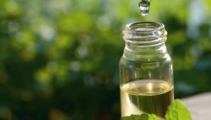 Aceite de Árbol de Té: Usos, propiedades y beneficios - ElBlogVerde.com | Anatomía y Fisiología, Cosmetología, Biología | Scoop.it