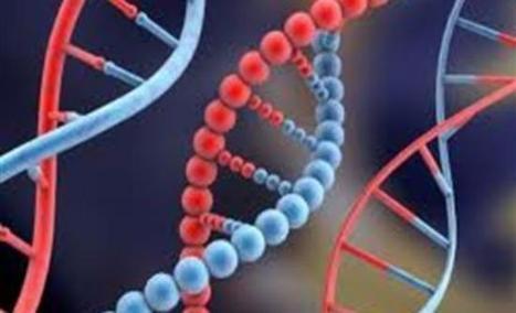 Το γονίδιο δεν είναι παντοκράτορας! - Real.gr | biosc&med | Scoop.it