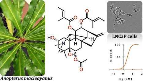 Cytotoxic C20 Diterpenoid Alkaloids from the Australian Endemic Rainforest Plant Anopterus macleayanus | Natural Products Chemistry Breaking News | Scoop.it