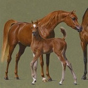 Luxemere Fantasy Foal   Arabian   Horse   Pedegru   Animals Make Life Better   Scoop.it