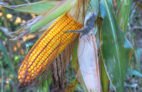 Producción de alimentos, cambio climático y contaminación ambiental | Las nuevas necesidad mundiales... Sostenibilidad, Cooperación... | Scoop.it
