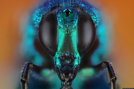 LOOK: You've Never Seen Insects This Close Before | How To Take Better Photographs | Scoop.it