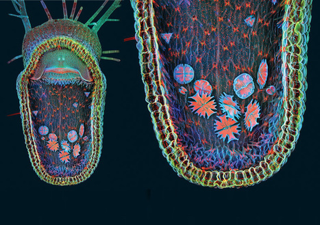 Life under the Microscope: Stunning Photographs from the BioScapes Competition [Slide Show]: Scientific American Slideshows | All things Genetic | Scoop.it
