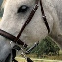 LightRider Bitless Bridles are fabulous! | Cool Horse Products | Scoop.it