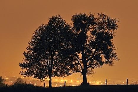 Pourquoi limiter l'éclairage de nuit ? | Les colocs du jardin | Scoop.it