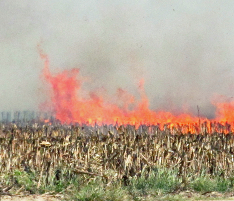 Hungary Destroys All Monsanto GMO Corn Fields   Plant Based Transitions   Scoop.it