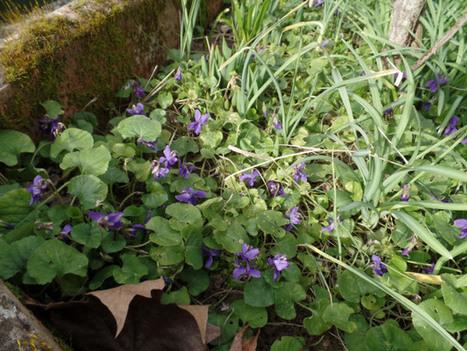 Parfum violette par LOU | The Blog's Revue by OlivierSC | Scoop.it