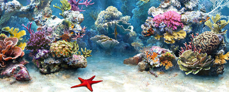Scuba Diving Training Phoenix & Scottsdale | Scuba Lessons | Ultimate Dive and Travel | Ultimate Dive and Travel | Scoop.it