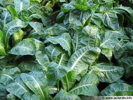 Potager : des légumes même en hiver!   Le jardin par Maison Blog   Scoop.it