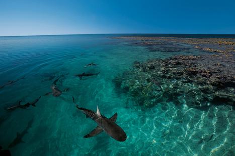 Îles Éparses, deux bouts de France dans l'océan Indien - National Geographic | Requins | Scoop.it