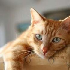 Is Your Cat Bored? | Webvet | kittens | Scoop.it