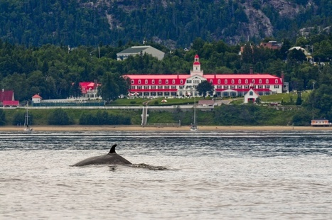 Hotel Tadoussac offers a whale of a time | Whales | Scoop.it