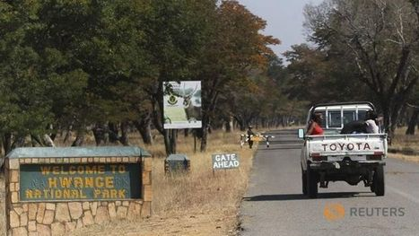 Zimbabwe game park staffers arrested over ivory theft - Channel News Asia | NGOs in Human Rights, Peace and Development | Scoop.it