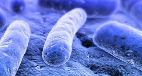 Male, 24, with E. Coli, C. Difficile, H. Pylori WLTM similar | Quite Interesting News | Scoop.it