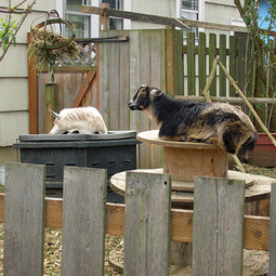 Failed backyard farms lead to growing number of homeless animals | MNN - Mother Nature Network | Local Economy in Action | Scoop.it