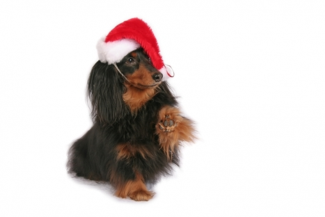 Keeping Pet Safe During the Holidays | Family Pets | Scoop.it