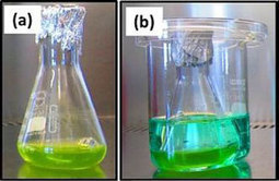 Enhancing photopigment formation to boost biofuel production | Chemistry World | Chemistry | Scoop.it