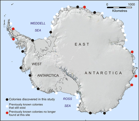 Penguins from space - satellite images of penguin poo reveal the location of emperor penguin colonies - British Antarctic Survey | Sciences & Technology | Scoop.it