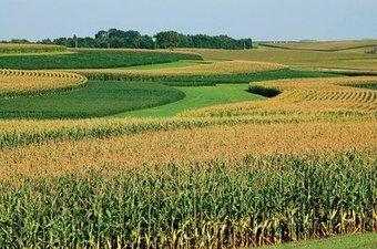 ETATS-UNIS – Une gestion des essais en champs d'OGM peu rigoureuse   Environnement et developpement durable   Scoop.it