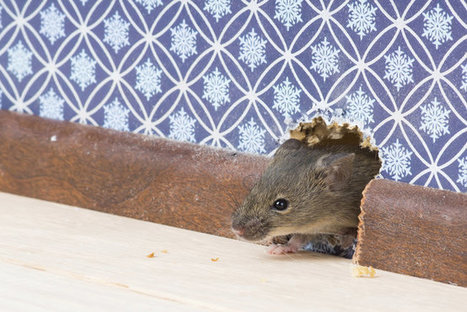 What to Know Before Hiring a Pest Control Service | Pest Inspection and Treatment in NC | Scoop.it