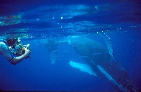 A Men's Chorus—Of Whales - Science Now | Honor the Orcas, Dive in! | Scoop.it