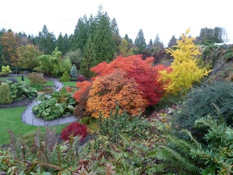 5 Places to See Fall Foliage in Metro Vancouver - Explore BC | What's Growing On | Scoop.it