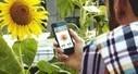 La Flower Power bientôt disponible à la vente ! | connected home | Scoop.it