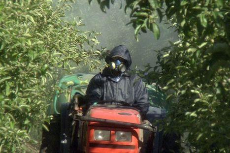«Moult études ont établi le lien entre pesticides et maladies» - Libération | Abeilles, intoxications et informations | Scoop.it