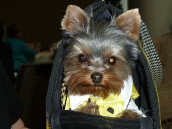 Pet bloggers assemble at BlogPaws 2013 | Pet News | Scoop.it