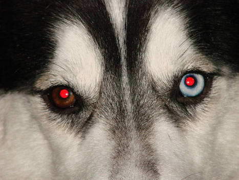 ¿Por qué salen los ojos rojos en las fotos? - RTVE.es   Fotografía social   Scoop.it