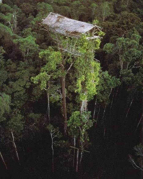 The Amazing Tree Houses of the Korowai Tribe | Strange days indeed... | Scoop.it