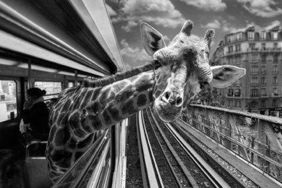jusqu'au 17 avril. Animetro par Clarisse Rebotier et Thomas Subtil à la Millesime gallery | Paris, sous toutes les coutures | Scoop.it