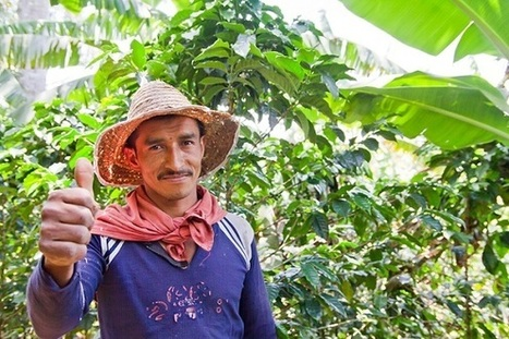 Kiva and Fair Trade USA Launch Innovative Loan Program for Small Coffee Farmers | Food Security & Sustainability | Scoop.it