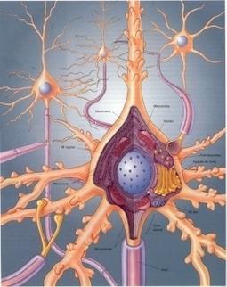La BiologíaCelular | Biologia celular | Scoop.it