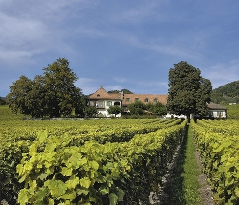 Heard on the grapevine: drones to transform viticulture • Drone Apps Conference | Geomatics | Scoop.it