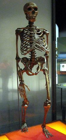Neanderthal Extinction Explained by Interbreeding | ThirdAge | Eeh by Gum | Scoop.it