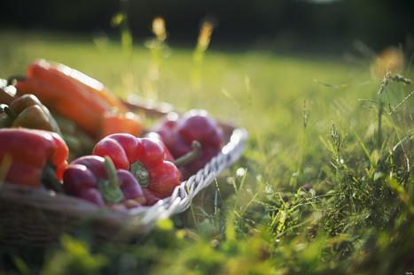 Où se fournissent les grands chefs de la gastronomie? Une appli donne la réponse | Epicure : Vins, gastronomie et belles choses | Scoop.it