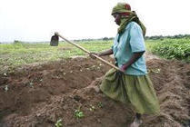 Africa can produce the food it needs | Food Security | Scoop.it