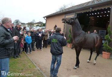 La coopérative a repris l'activité des Haras nationaux, à Cercy-la-Tour, au 1er janvier | Trotting club | Scoop.it