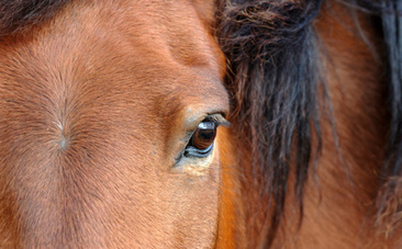 horse-industry-news