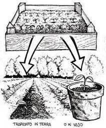 Una rete nazionale di orti biologici didattici | orto didattico | Scoop.it
