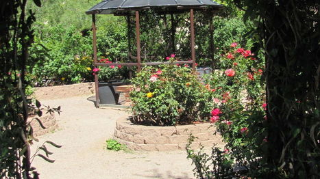 Tucson's hidden glorious gardens are open to all | CALS in the News | Scoop.it