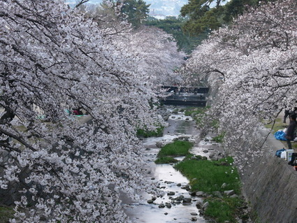 Street View guide to Japan: Sakura Edition – Google | Languages Links for the Classroom | Scoop.it