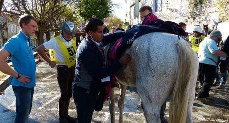 Le champion, c'est  le cheval | Cheval et sport | Scoop.it